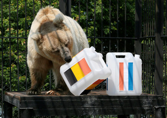 A bear attempts to predict the result of the soccer World Cup semi-final between France and Belgium at a zoo in Krasnoyarsk