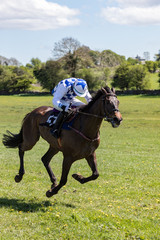 Single race horse and jockey galloping at speed