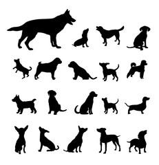 Hunde - 12