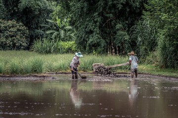 Picturesque farming paddy field scene in Thailand with thai farmer male using tiller and thai farmer female doing traditional dip netting to get fish in beautiful tropical landscape