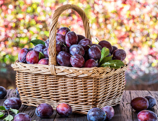 Plum harvest. Ripe plums in the basket on the table.