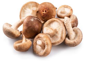 Shiitake mushrooms on the white background.