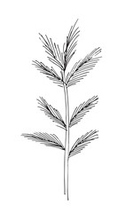 Hand-drawn sketch of a plant, isolated on white background