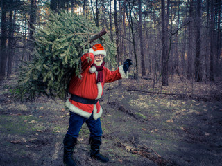 Christmas Tree Delivery. Santa Claus with real green christmas tree in the forest.