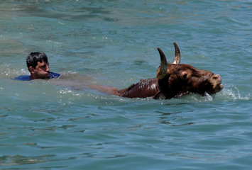 """A reveller swims next to a bull during the """"Bous a la Mar"""" festival in the coastal town of Denia"""