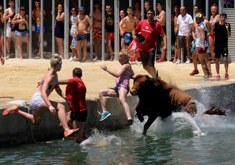 """A bull and revellers jump into the sea during the """"Bous a la Mar"""" festival in the coastal town of Denia"""