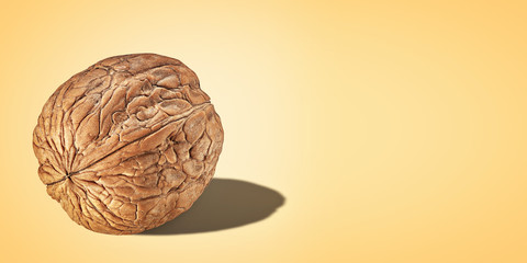 Creative poster Walnut in shell closeup isolated yellow background with copy space. Nut Macro concept