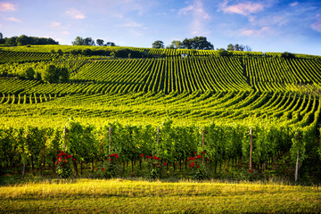 Wall Murals Vineyard Landscape vineyards of wine route. France, Alsace