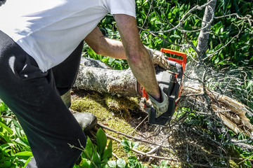 A man uses a chainsaw without protective equipment.
