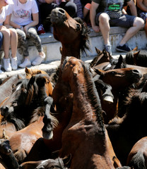 """Horses fight during the """"Rapa das Bestas"""" traditional event in the village of Sabucedo"""