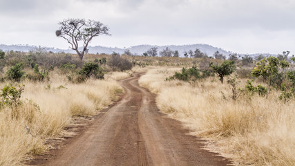 Photo on textile frame South Africa Gravel road S114 in Afsaal area in Kruger National park, South Africa
