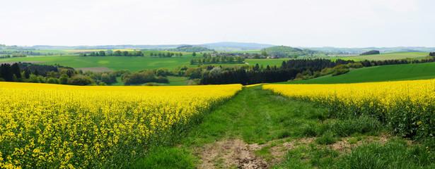 Landschaft in Hunsrück mit Rapsfeldern Panorama im Frühling