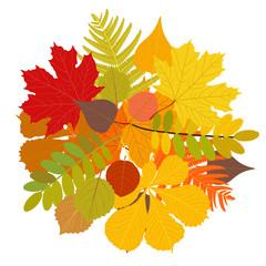 Isolated autumn leaves, vector illustration