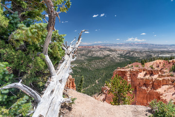 Tree trunk pointing towards Bryce Canyon landscape