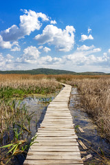 Nature wooden boardwalk vanishes in the common reed grass of the Dragoman Marsh in Sofia Province - the biggest natural karst wetland in Bulgaria