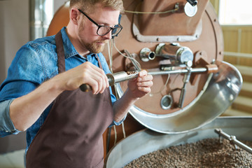 Waist up portrait of modern young man wearing apron and glasses  taking scoop of coffee beans from...