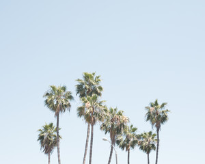 Palm trees in a beach in California