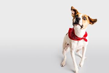 Adorable hound with bandana