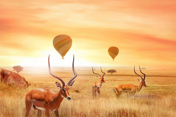 Group of african antelopes in the African savanna against a beautiful sunset and air balloons.  African fantastic landscape. Flight over the African savannah in the Serengeti National Park. Wall mural