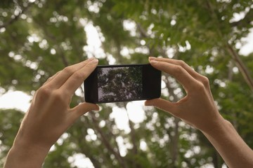 Woman taking photo of tree with mobile phone