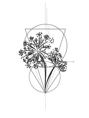 wild flower geometric tattoo. vector hand drawn sketch. Peucedanum