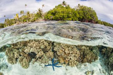 Tropical Scenery in Solomon Islands