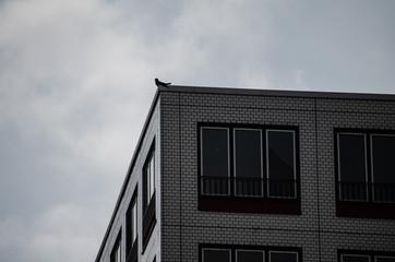 a bird sit in the corner