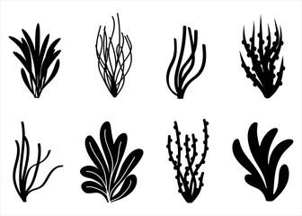 algae icon set. Marine plants isolated