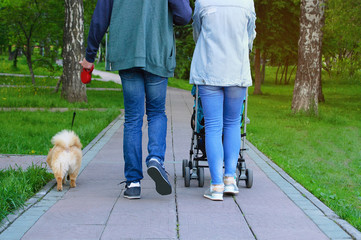 A man and a woman with a child and a dog are walking in the park.
