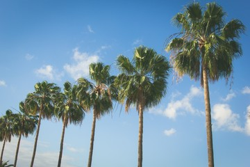 Palm trees row over blue sky. Vintage summer holiday road trip vacation