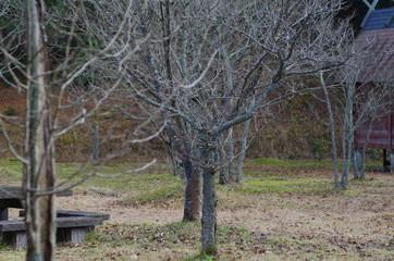 木々の景色