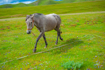 A horse in the pasture that is eating grass