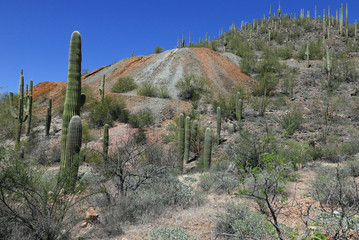 Tailings of an old copper mine in the Tucson mountains, Arizona