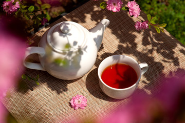 Beautiful view of the tea among the cherry blossoms. View from above. A teapot and a cup of tea are surrounded by flowering branches of Japanese cherries. Spring fragrant tea.