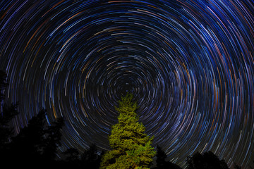 Circular Star Trails Over Pine Tree. Concept Night Sky Astrophotography