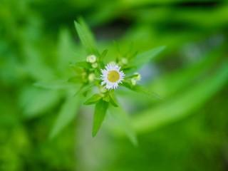 민들레 꽃과 물방울