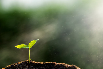 The seedling are growing from the rich soil to the morning sunlight