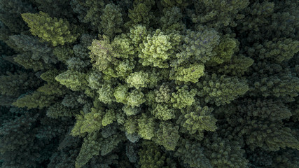 Foto auf Acrylglas Khaki Treetops and Cloudy Forest From Above