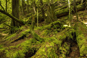 green mosses covered tree trunks laying around in the forest