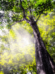 The rays of the sun shines through the tree's. Background Nature