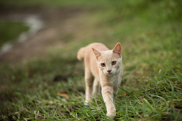 Orange shorthair tabby cat climbing and exploring in nature