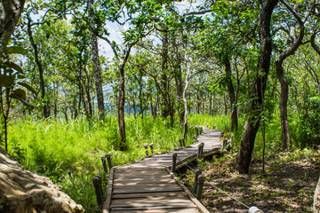 The wooden walk way on the Moutain at Pa Hin Ngam National Park , Chaiyaphum in Thailand.