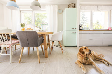 Dog lying on the floor in real photo dining room and kitchen int