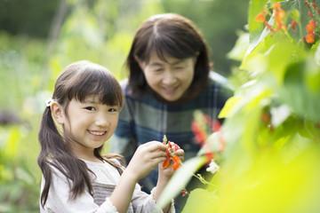 畑で植物の観察をする孫と祖母
