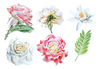 Set with watercolor flowers. Rose. Lily. Hand drawn.