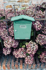 Green mailbox and pink hydrangea bush between a rusty iron fence