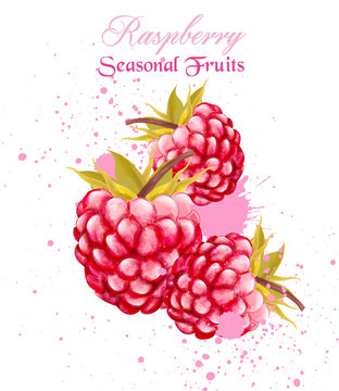 Watercolor raspberry summer card background Vector
