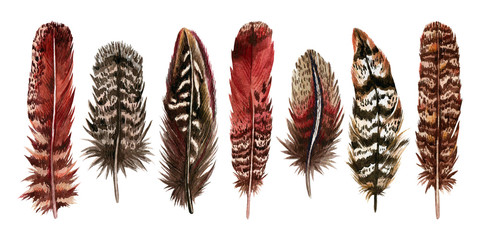 Watercolor hand drawn isolated set of red feathers
