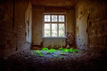 Lost Place Farn im Lichtkegel