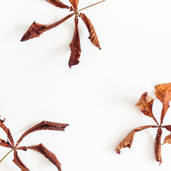 Autumn composition. Frame made of autumn dried leaves on white background. Flat lay, top view, copy space, square